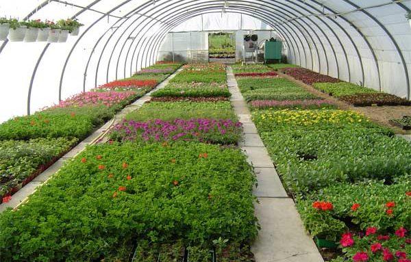 CAP-horticulture1.jpg
